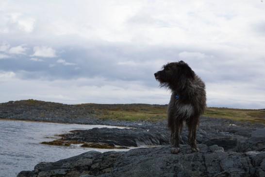 sea-dog
